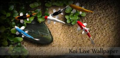 Koi Live Wallpaper Full